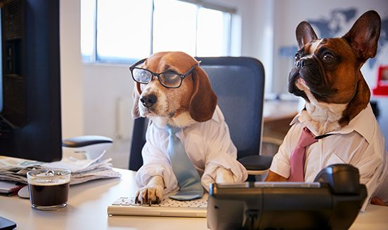 Dogs dressed in suits working on a computer
